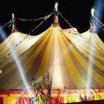 Circus Performer Training