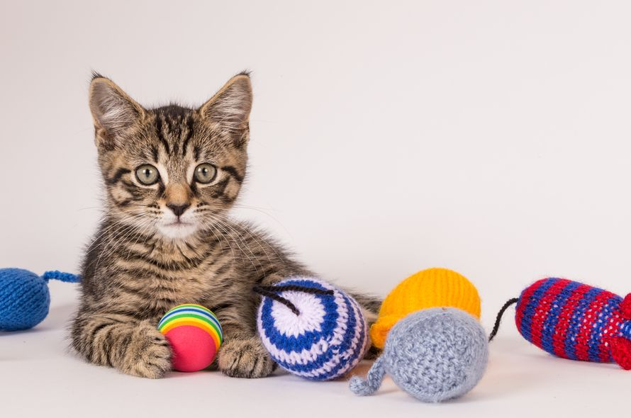Knit'n Kittens